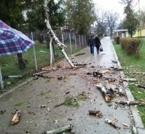 Cade copacul!