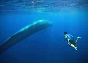 """""""Balena albastra"""", din Rusia, în oceanul presei europene"""